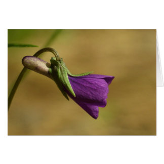 紫色愛 カード