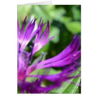 紫色色 ノートカード