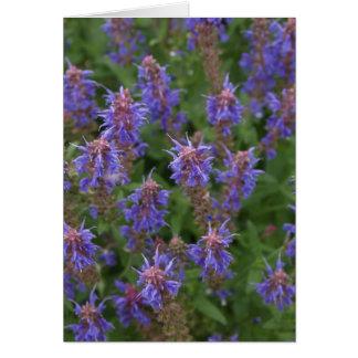 紫色草原の賢人 カード