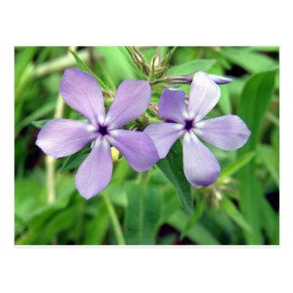 紫色 ポストカード