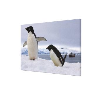 組のアデリーペンギン南極大陸 キャンバスプリント