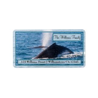 組のザトウクジラの宛名ラベル ラベル