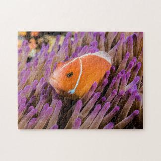 組のClownfishのジグソーパズル ジグソーパズル