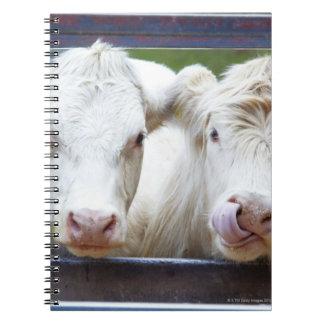 組のtrailorを食べ物を与えることの若く白い牛 ノートブック