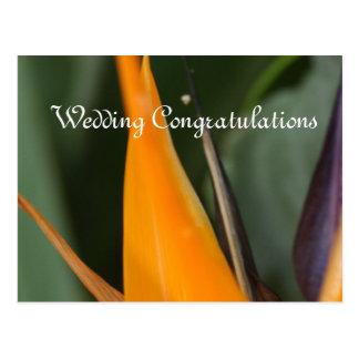 結婚式のお祝いの郵便はがき極楽鳥 ポストカード