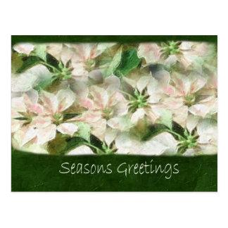 絵画的なピンクおよび白いポインセチア1 -季節G ポストカード