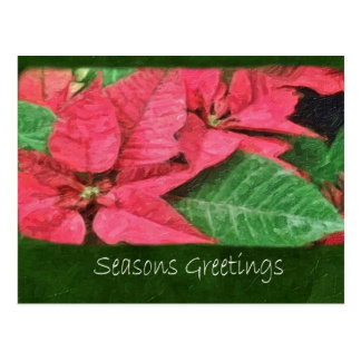 絵画的なピンクのポインセチア4 -季節のごあいさつ ポストカード