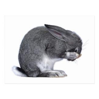 絶望のウサギ ポストカード