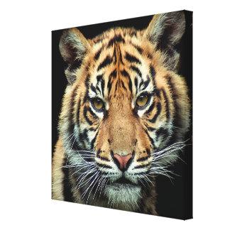 絶滅寸前の虎の子 キャンバスプリント