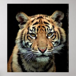 絶滅寸前の虎の子 ポスター