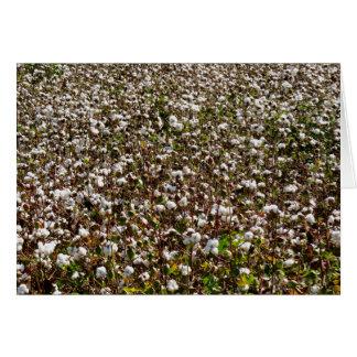 綿分野 カード
