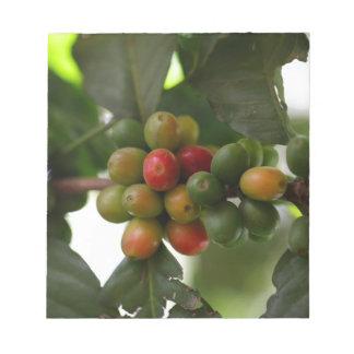緑および赤いコーヒー豆 ノートパッド