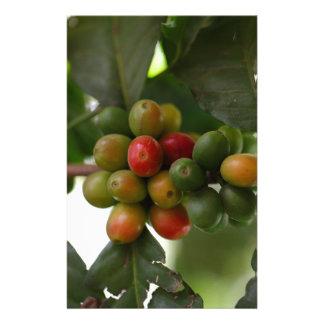 緑および赤いコーヒー豆 便箋
