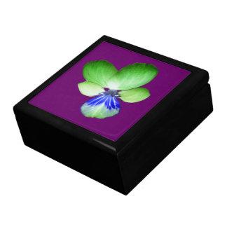 緑および青のパンジーのギフト用の箱 ギフトボックス
