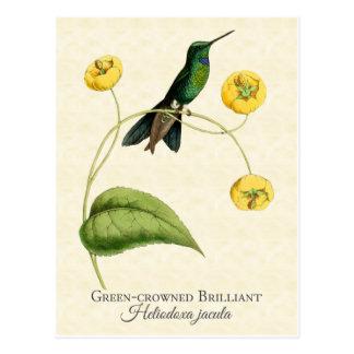 緑によって戴冠させる華麗なハチドリのヴィンテージの芸術 ポストカード