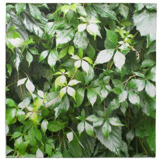 緑にキヅタのはうことの大きい成長 ナプキンクロス
