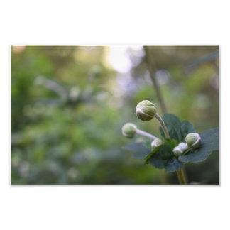 緑のつぼみの庭の自然の写真撮影の花柄 フォトプリント