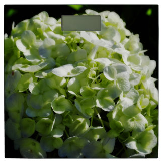 緑のアジサイの花 体重計