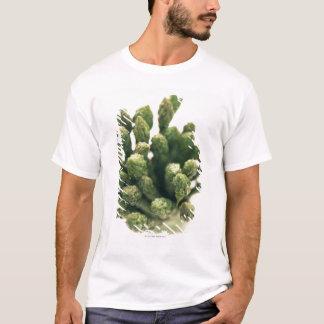 緑のアスパラガス Tシャツ