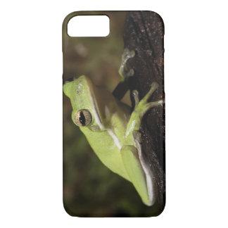 緑のアマガエル、アマガエル属のcineria、 iPhone 8/7ケース