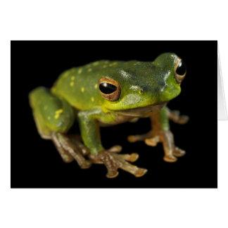 緑のアマガエル カード