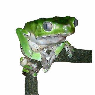 緑のアマガエル 写真彫刻マグネット