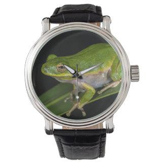 緑のアマガエル(cinereaアマガエル属) 2 腕時計