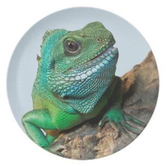 緑のイグアナ プレート