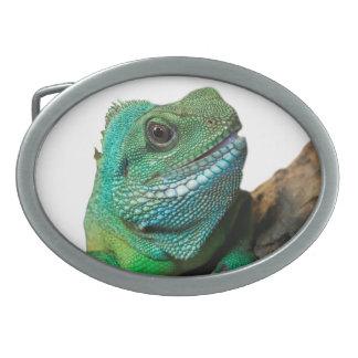 緑のイグアナ 卵形バックル