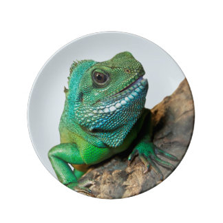 緑のイグアナ 磁器プレート