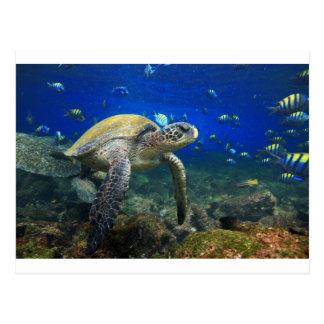 緑のウミガメの水中ガラパゴスの楽園 ポストカード