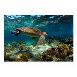 緑のウミガメの水中ガラパゴス諸島 ポストカード