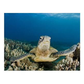 緑のウミガメは、(Cheloniaのmydas)、です ポストカード