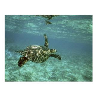 緑のウミガメ、(Cheloniaのmydas)、Konaの海岸、 ポストカード