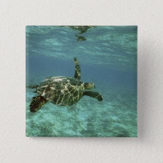 緑のウミガメ、(Cheloniaのmydas)、Konaの海岸、 5.1cm 正方形バッジ