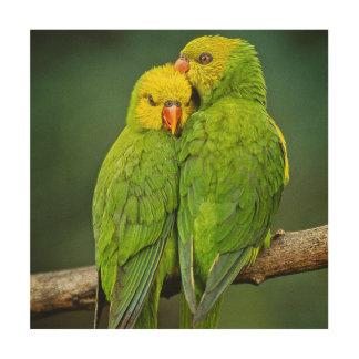 緑のオウム愛鳥の写真撮影 ウッドウォールアート