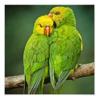緑のオウム愛鳥の写真撮影 フォトプリント
