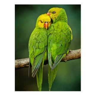 緑のオウム愛鳥の写真撮影 ポストカード