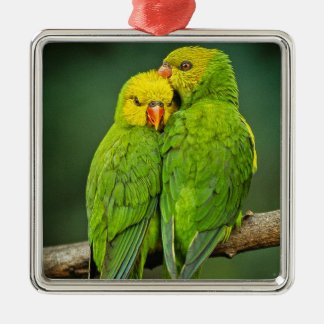 緑のオウム愛鳥の写真撮影 メタルオーナメント