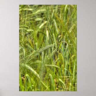 緑のオオムギ分野HDRの写真ポスター ポスター