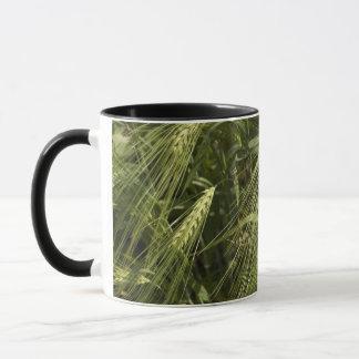 緑のオオムギ マグカップ