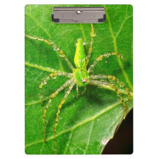 緑のオオヤマネコのくもの露 クリップボード