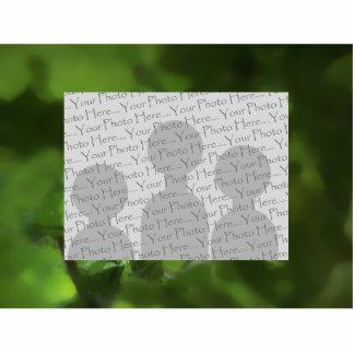 緑のカシの葉。 枝のギャップ 写真彫刻(台付き)