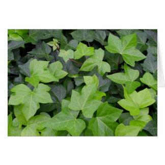 緑のキヅタの植物のプリント カード