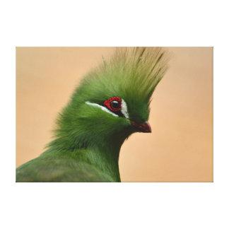 緑のギニーのエボシドリ科の鳥 キャンバスプリント