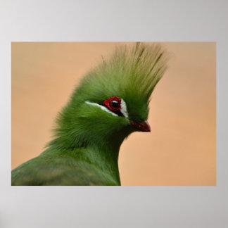 緑のギニーのエボシドリ科の鳥 ポスター