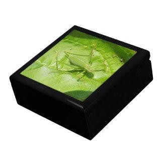 緑のコオロギのカムフラージュのギフト用の箱 ギフトボックス