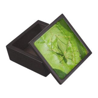 緑のコオロギのカムフラージュの優れたギフト用の箱 ギフトボックス