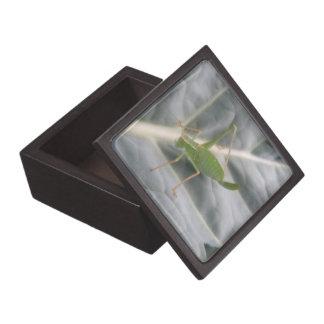 緑のコオロギのマクロ優れたギフト用の箱 ギフトボックス