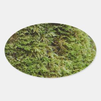 緑のコケ 楕円形シール